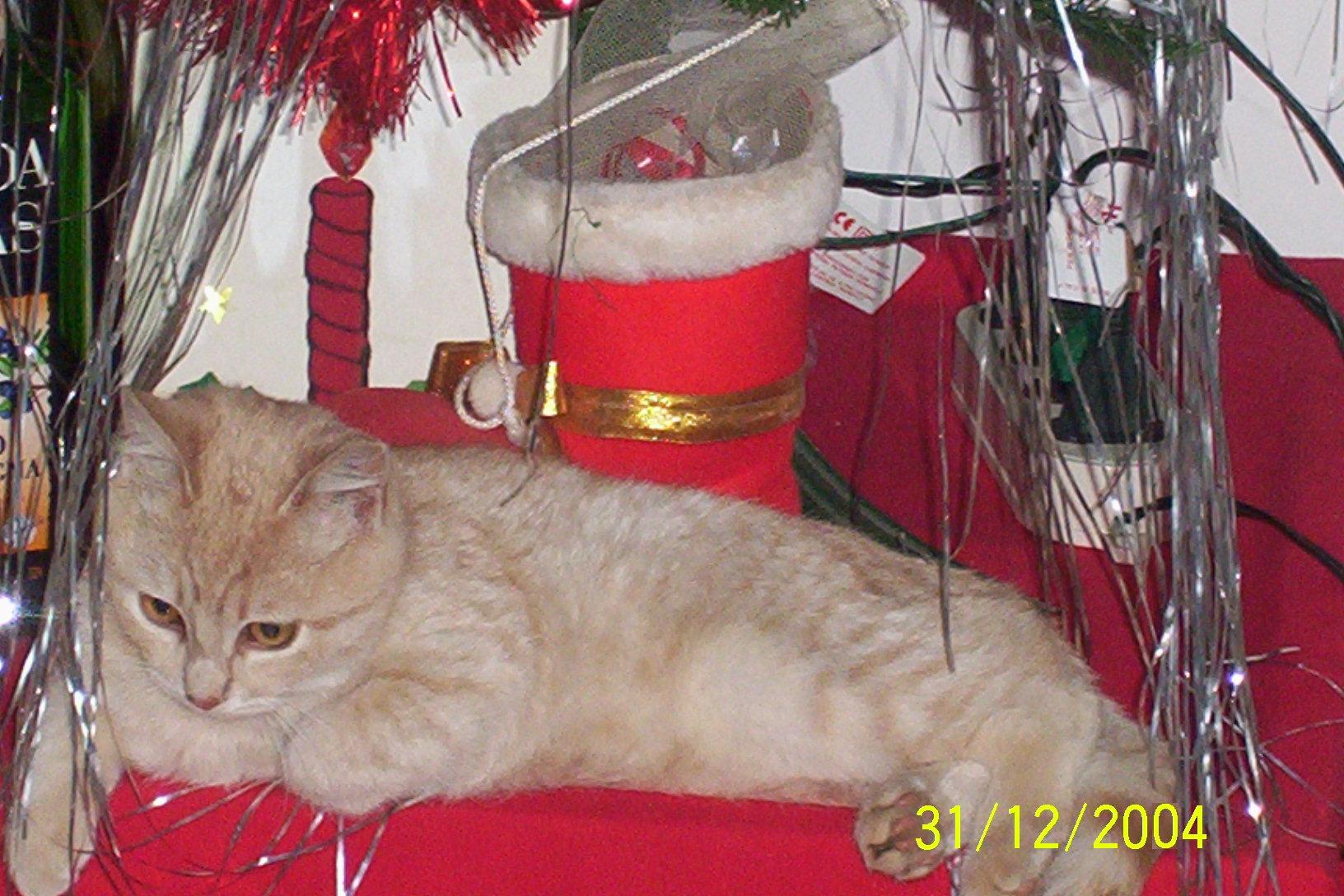 Gigio Natale02